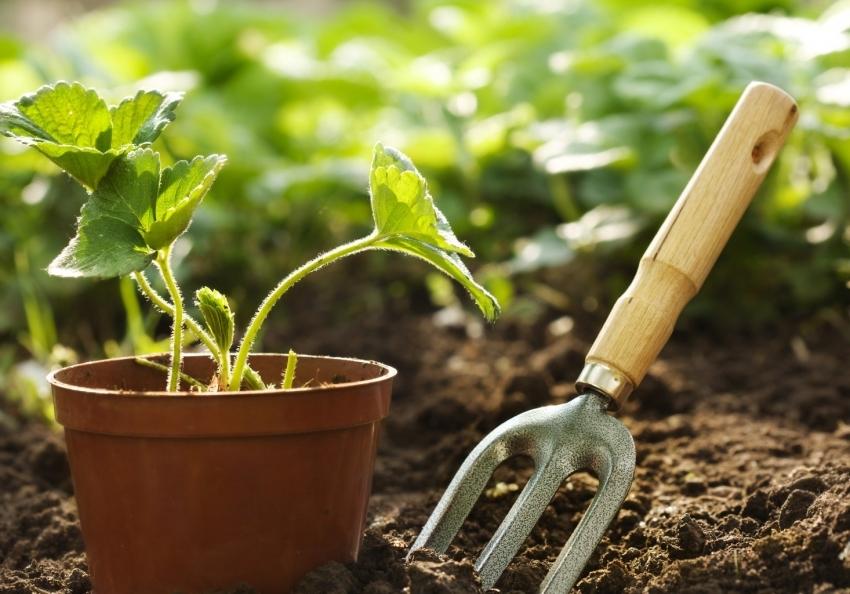 Для повышения урожайности и восстановления грунта следует использовать сидерацию и севооборот