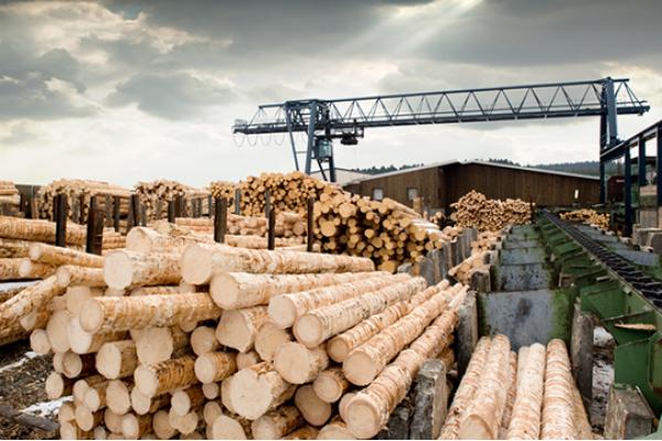 Медведев ответил на вопрос о незаконном вывозе леса в Китай