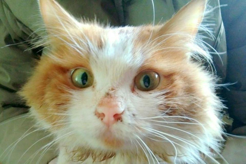 В Екатеринбурге спасли рыжего кота, который 5 дней провел в вентиляционной шахте
