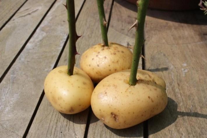 9 необычных способов применения картофеля, о которых вы даже не догадывались