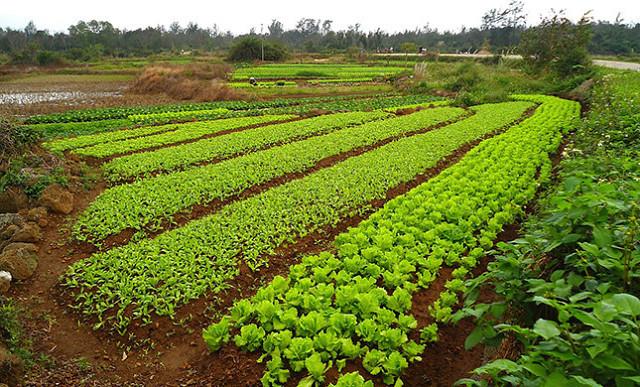 Безвредные недорогие средства в помощь садоводам и огородникам