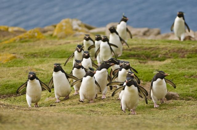 Остров с пингвинами в Фолклендском архипелаге выставлен на продажу