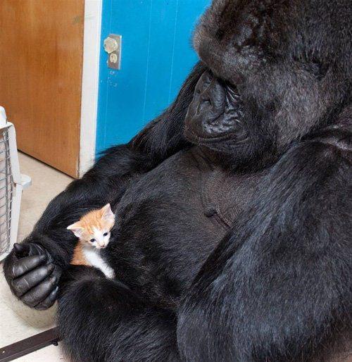 Животные знаменитости. Часть…