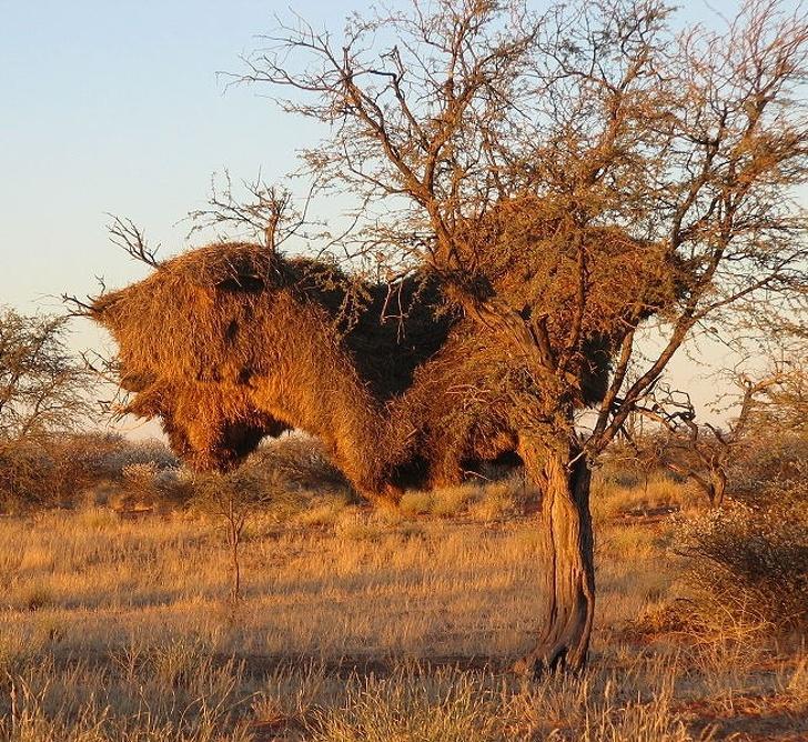 15неожиданных фактов, которые откроют мир животных сновой стороны