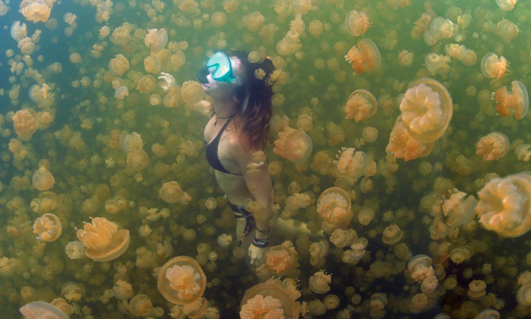 Увидеть и умереть. Поплавать среди медуз
