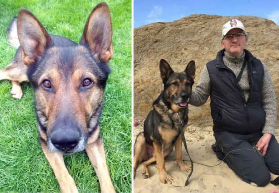 Финн — суровый полицейский пёс