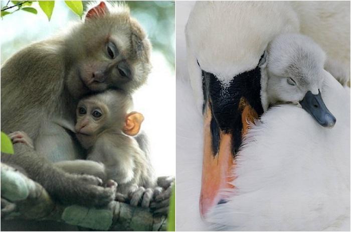 Фотографии мам  и их милейших детёнышей