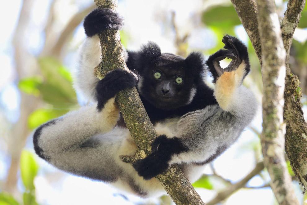 Смешные фотографии животных со всего мира с конкурса Comedy Wildlife Photography Awards 2017