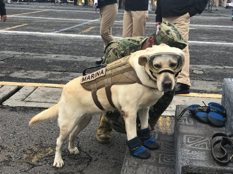 Служебная собака, которая за короткое начало карьеры спасла уже 52 человека