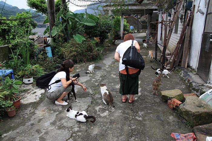 Кошки и коты в тайваньской деревне.