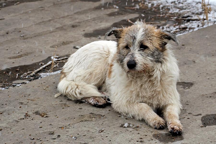 тогда, сейчас показать бездомных животных картинки вариантов