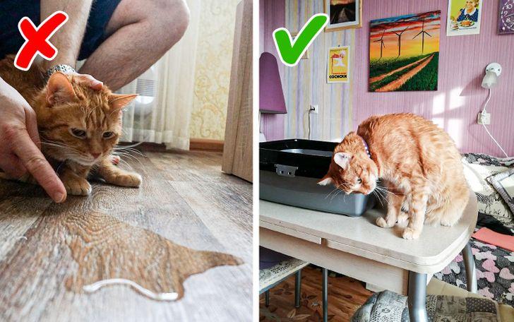 9 воспитательных приемов, которые превратят вашего вредного домашнего хищника в ласкового пушистика домашние животные,наши любимцы