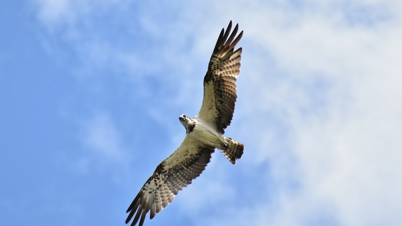Продуманный маршрут позволяет птицам не уставать во время перелетов через океан Наука