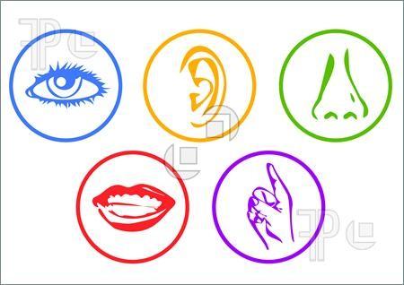 У человека гораздо больше пяти чувств интересно, познавательно, тело, факты