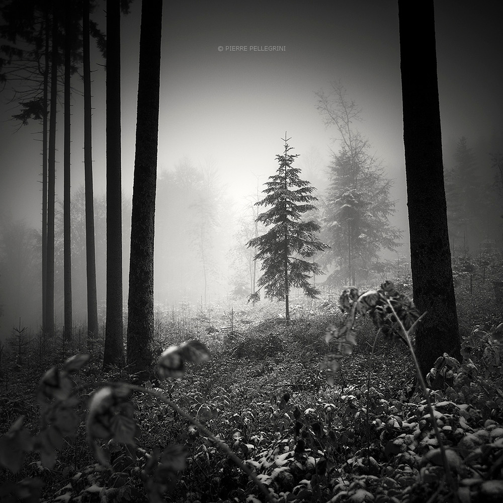 Cherno-belye-peyzazhnye-fotografii-Pera-Pellegrini 21