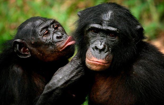 10 необычных сексуальных ритуалов животных