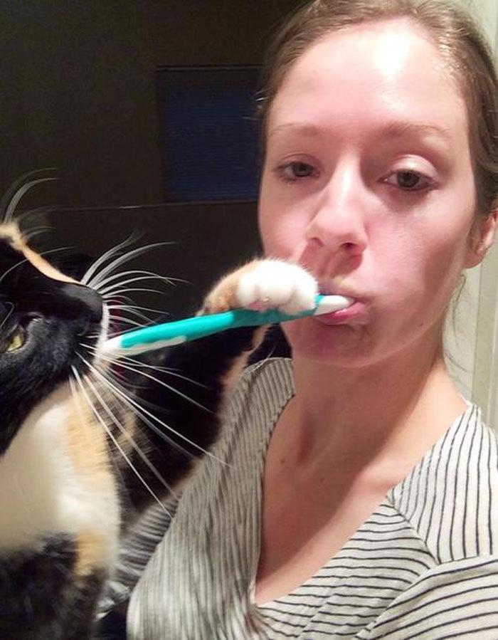 10+ кошек, которые плевать хотели на личное пространство своих хозяев домашние животные,наши любимцы