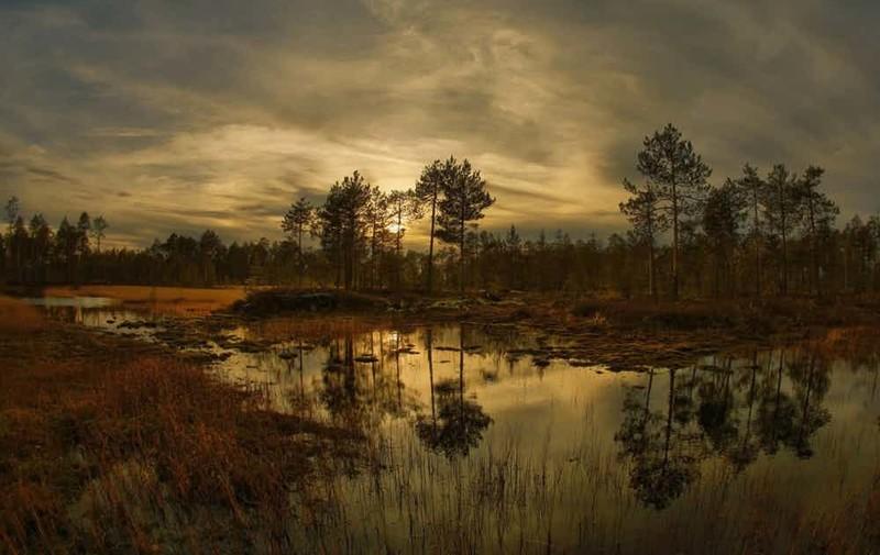 12. Васюганские болота сибирь, факт