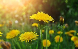Растения, снимающие зуд от укусов