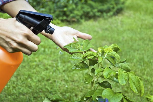 Препараты, которые спасают урожай
