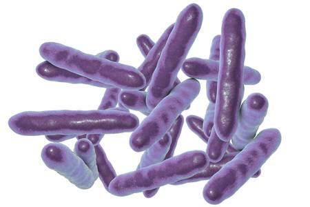 бактерия Tropheryma whipplei