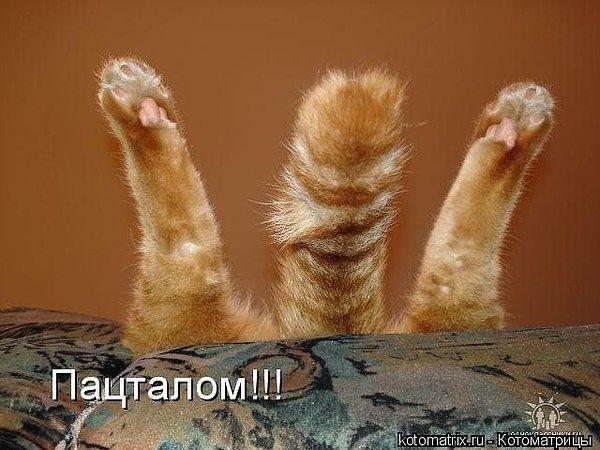 Кошки, коты и котики... Замечательная подборка забавных историй и фотографий