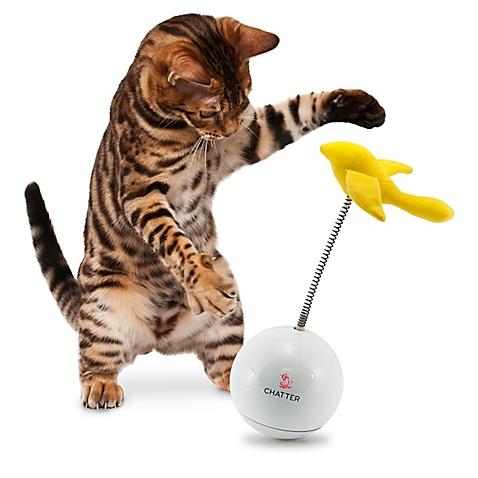 40 способов развлечь кота – Интересное о поведении кошек