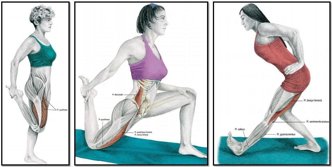 При сексе сжимаете мышцы