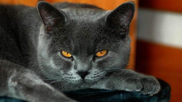 Похождения кота