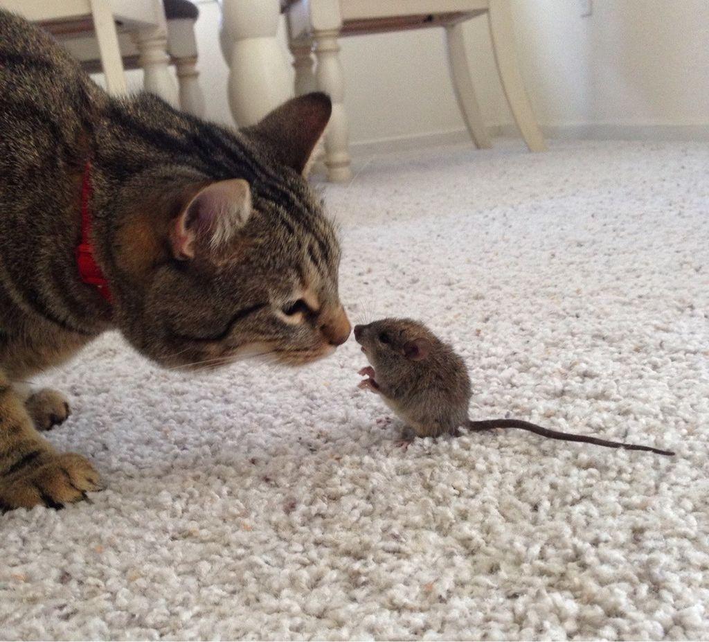 смешные картинки из жизни кошек как врача гинеколога