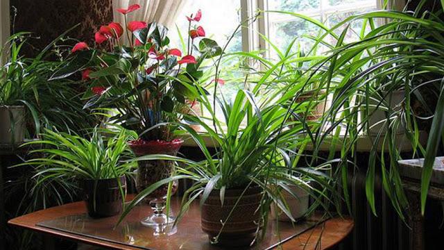 6 комнатных растений, которые необходимо купить, если в квартире есть курильщик и если вам дорого здоровье