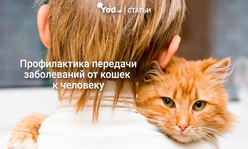 Профилактика передачи заболеваний от кошек к человеку