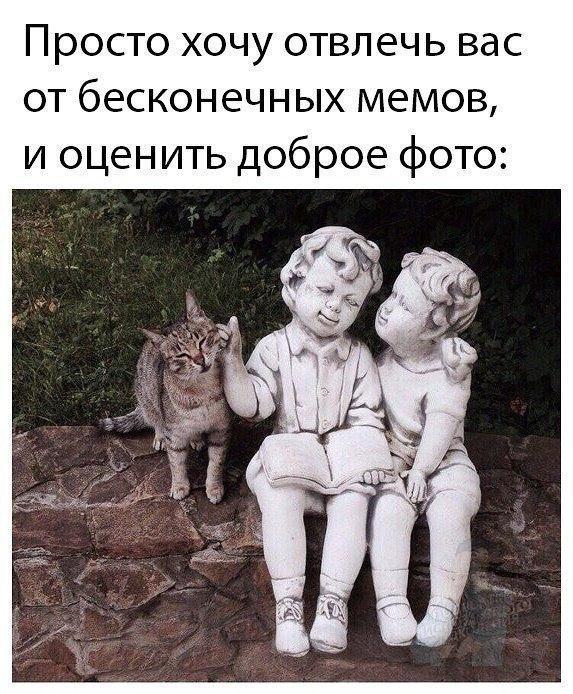 Подборка веселых картинок и фотографий с надписями про котиков