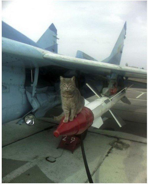 История о коте и комдиве