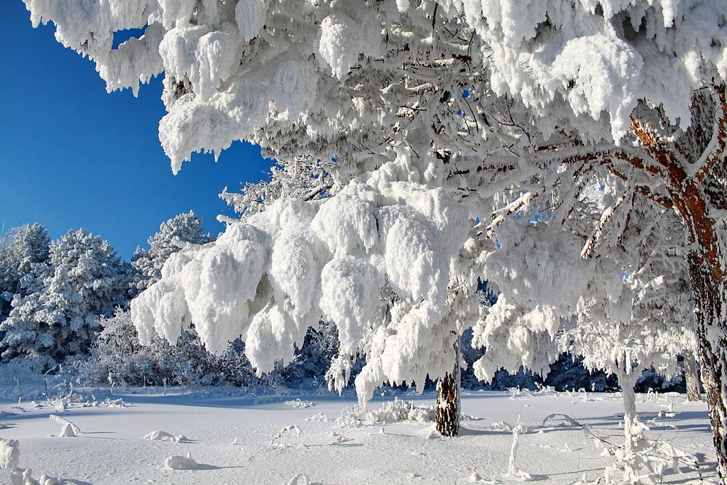 Снова в заботах Зима-рукодельница...