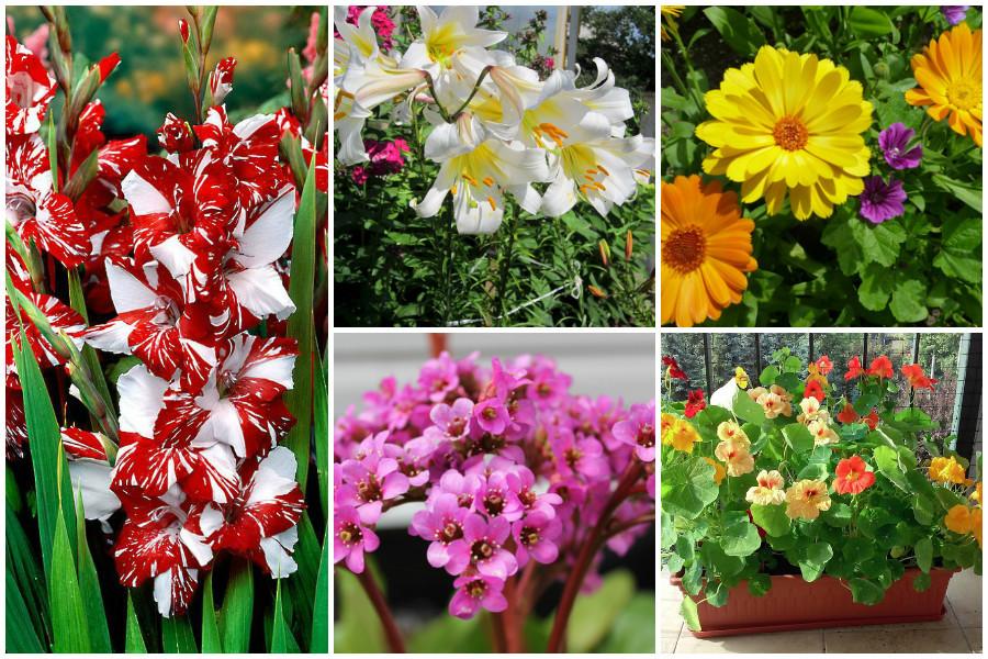 10 целебных цветов и раÑтений на Вашей клумбе