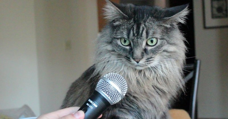 Ирландская кошка сама рассказала хозяйке о самом главном