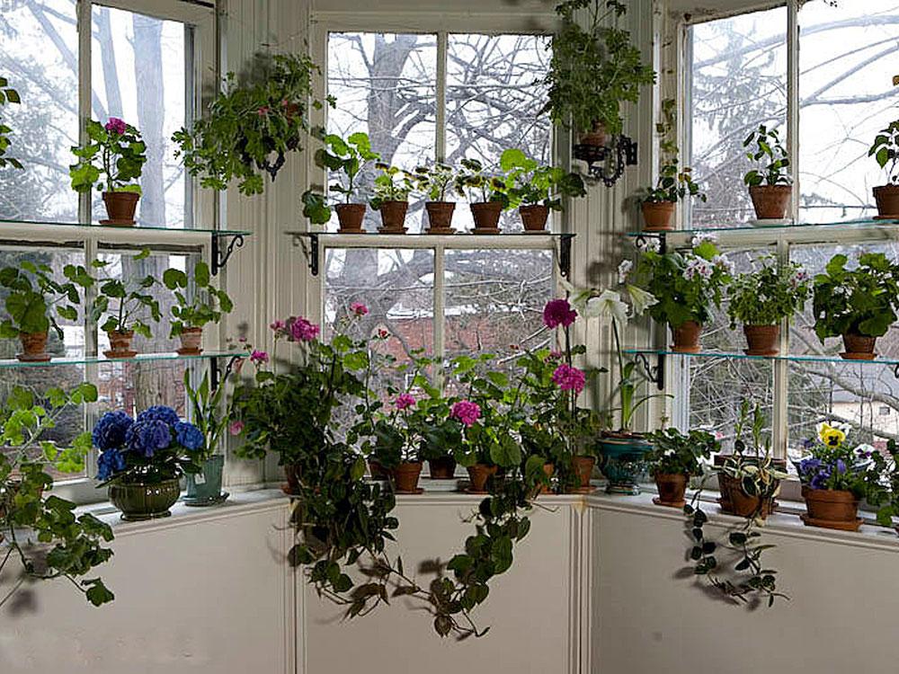 Как расставить цветы в доме фото