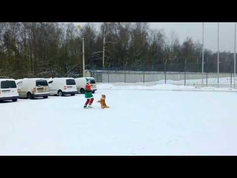 Зимний танец гнома