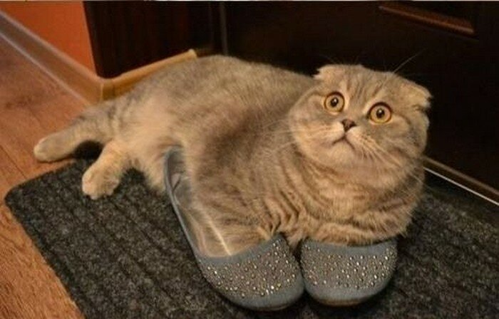 Кто гадит? Я только примерил врасплох, кошки, смешные, собаки, фото, шкодники