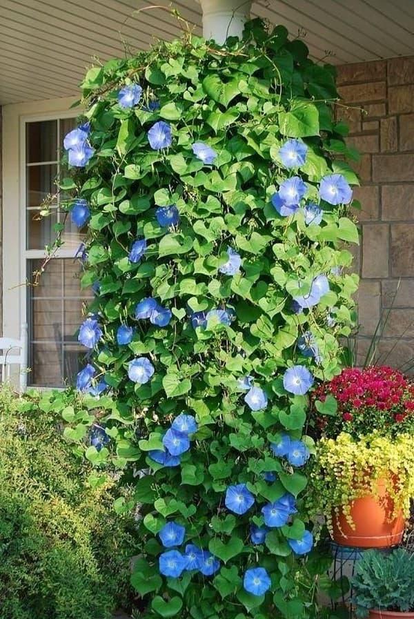 Висячие сады Семирамиды: живописные идеи для террасы ландшафтный дизайн,садоводство