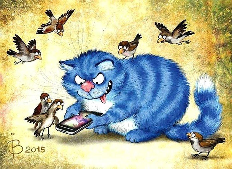 Котские истории