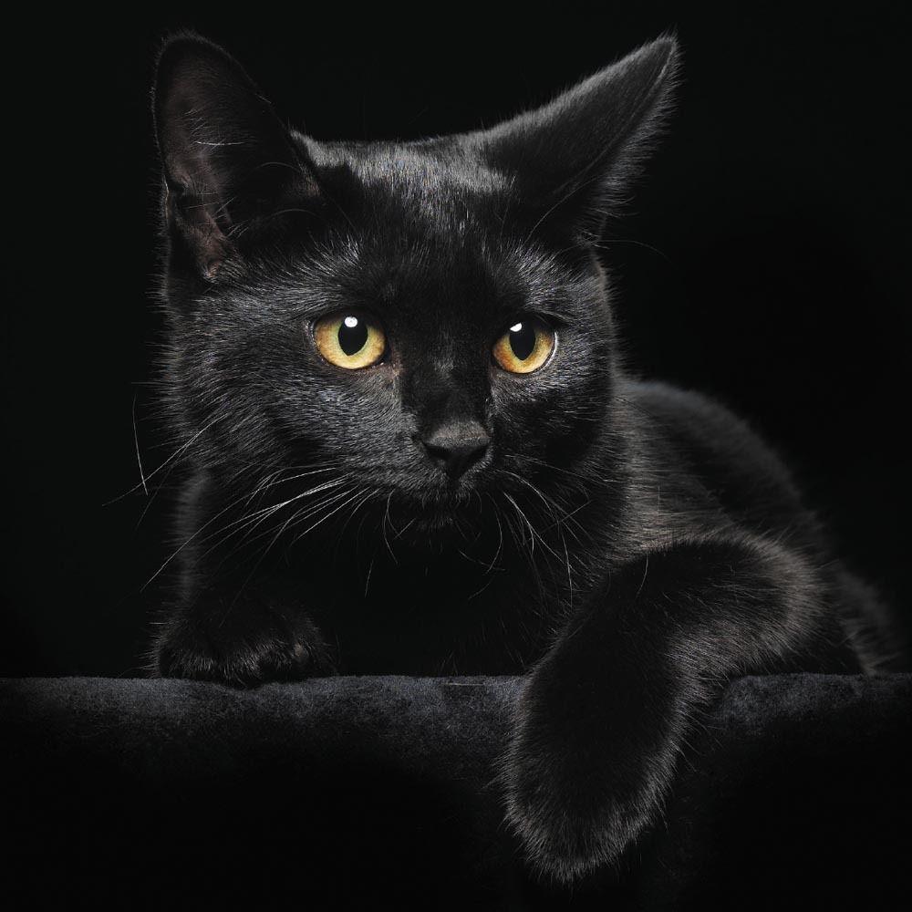 История о мести чёрного кота