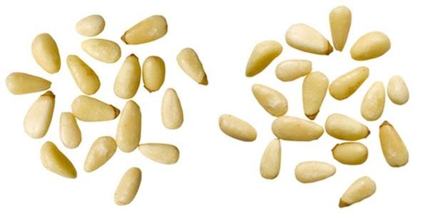 5 интересных фактов про орехи пинии
