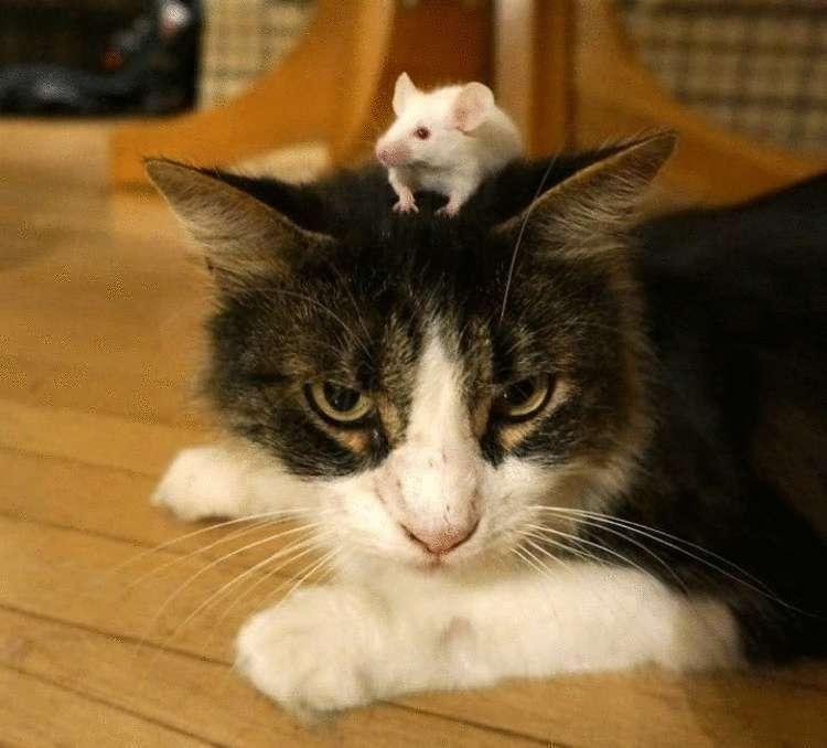 Кошки-мышки, дружба которая существует, но не очень в это верится