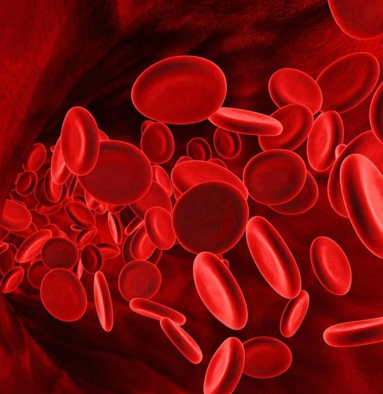 Рецепты очищения и оздоровления крови от врача-натуропата