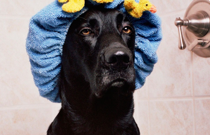 Чтобы помыть пса я пошел на хитрость, которая потом вышла мне боком