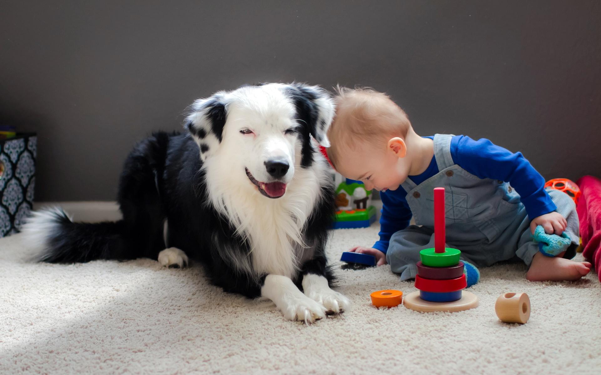 Картинка щенок бимбо которого подарили малышу