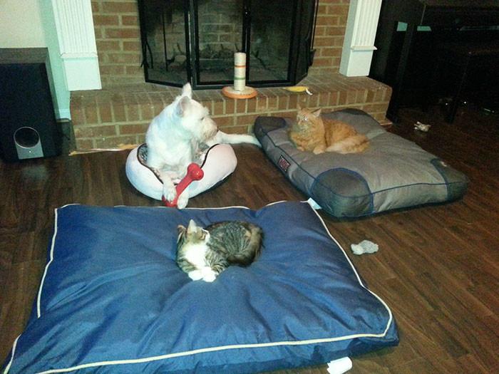 самые смешные коты и собаки приколы