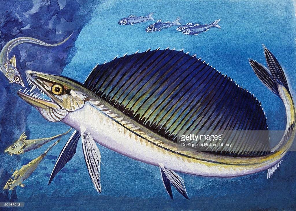 рыба пилозуб картинки эконом